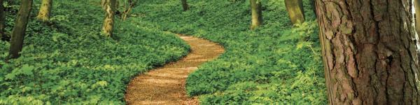 Baumpflanztag 2017<br/>Wir schaffen Grünes<br/>Pflanzen ist einfach